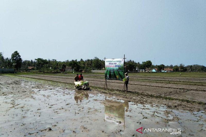 Distan Kulon Progo uji coba teknologi Jajar Legowo Super seluas lima hektare (VIDEO)