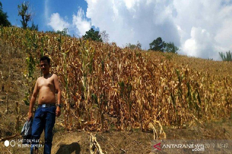 Setahun bencana Sulteng- Pascagempa petani Sigi masih merana