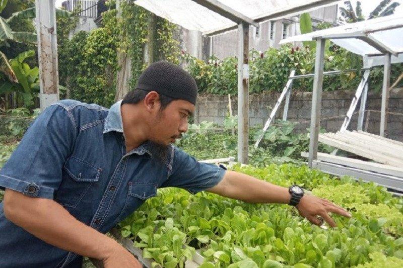 Mengenal tanaman hidroponik yang semakin digemari warga Kota Pontianak