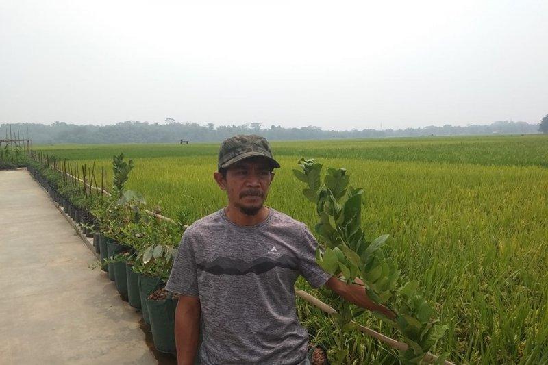 Kelompok tani di Lebak kembangkan wisata edukasi pertanian