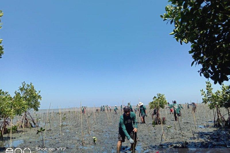 PT Mars  tanam 1.000 bibit mangrove di Pangkep