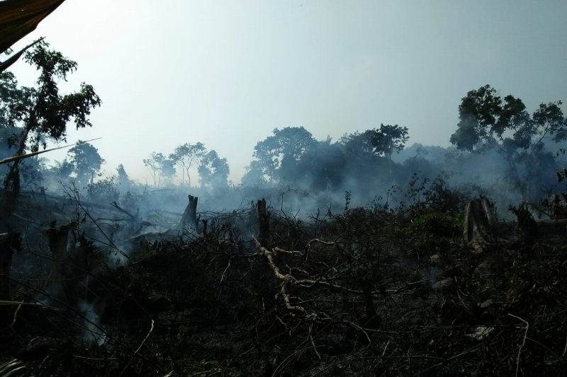 Kemarau, 1,5 hektare kebun kepala sawit warga di Agam terbakar