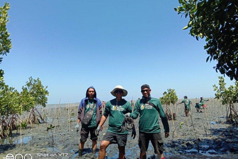 92.400 bibit mangrove siap ditanam di Kabupaten Pangkep
