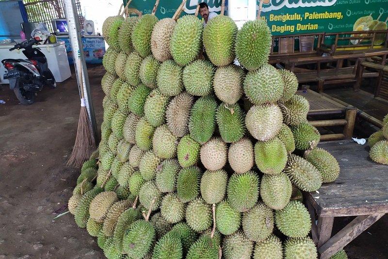 Durian asal Sumatera Barat marak dijual di Lampung