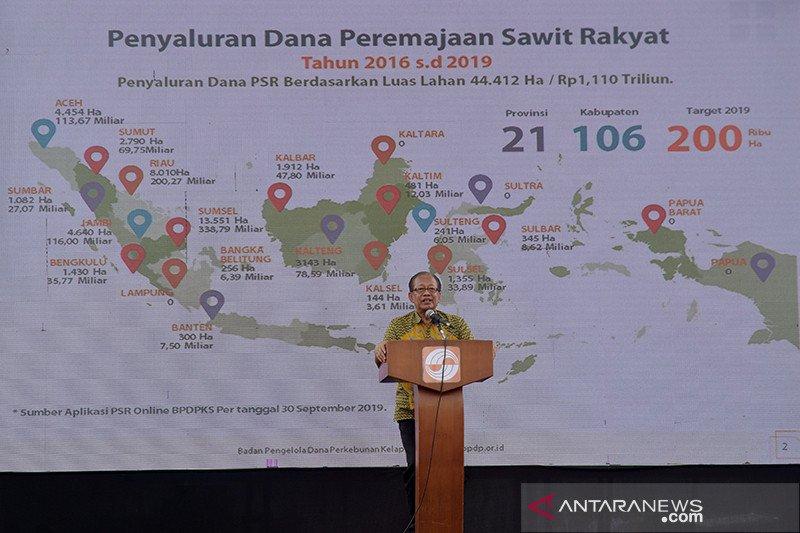 BPDP-KS nilai peremajaan sawit rakyat 2019 sulit capai target 200.000 Hektare