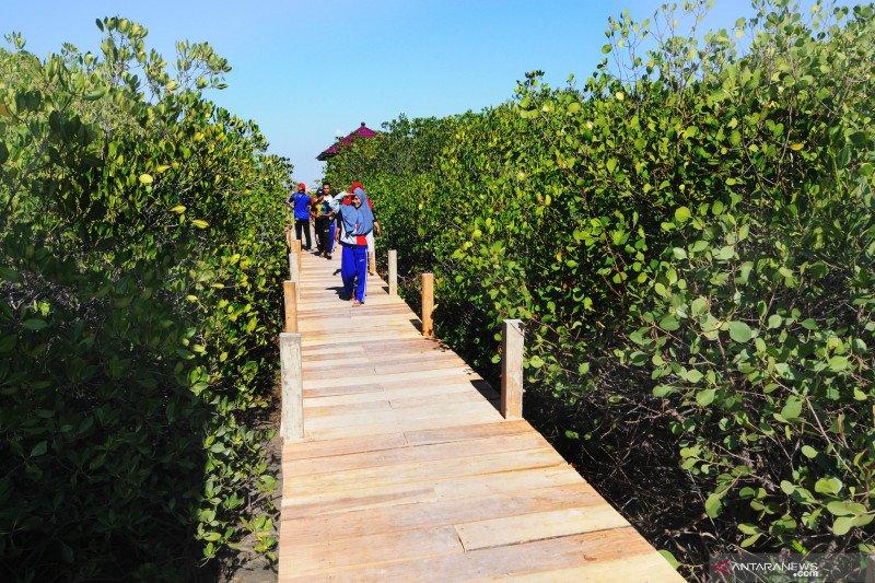 Wisata edukasi hutan mangrove terbesar di Madura