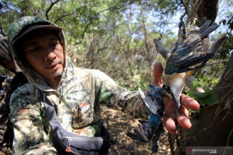 Aktivis satwa temukan burung dilindungi tergantung di hutan Pamurbaya