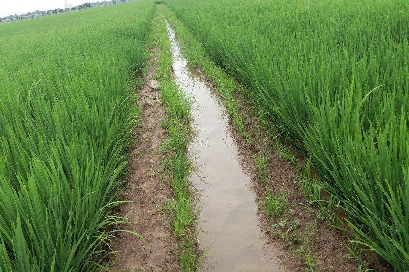 Pemerintah Desa Pandan Dulang OKU  bangun sistem irigasi sawah