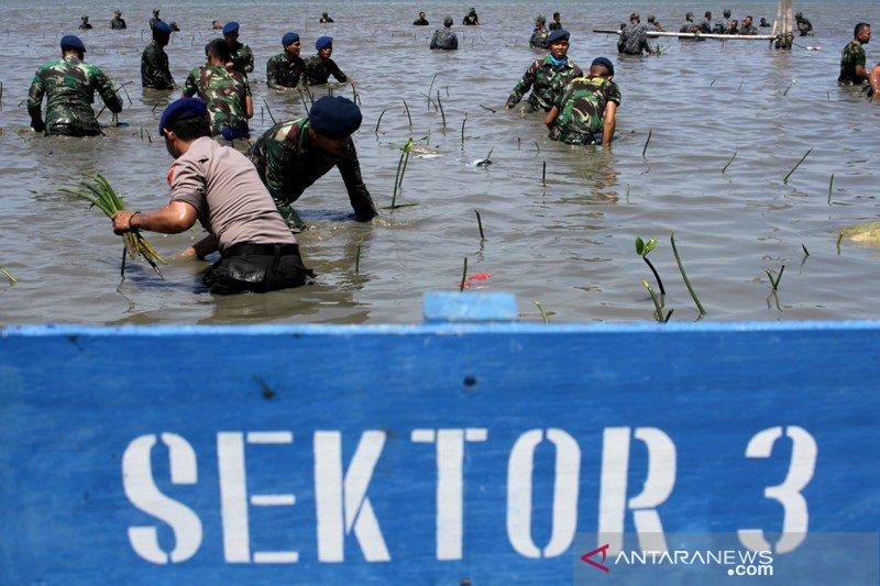 Penanaman Mangrove HUT TNI