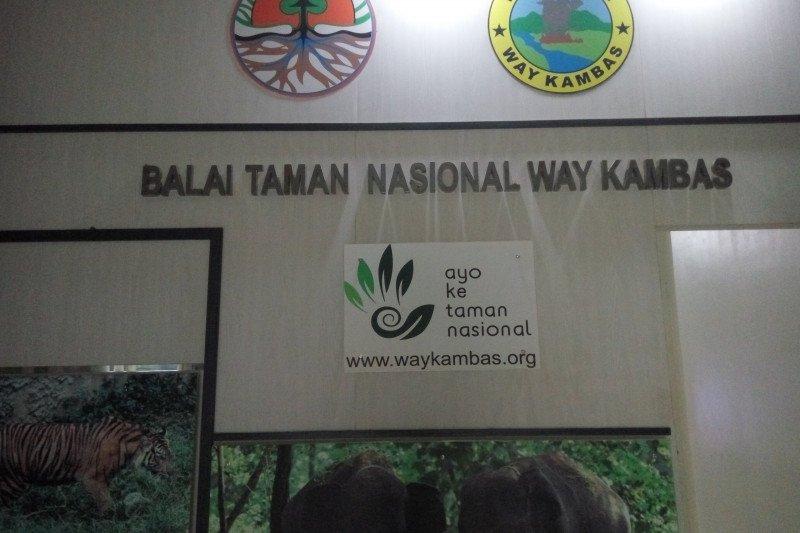 729  hektare hutan Way Kambas terbakar