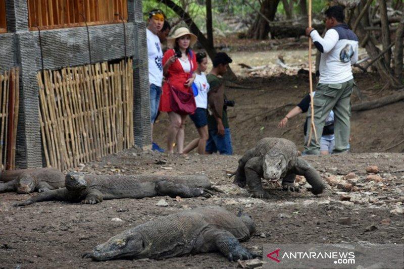 Pulau Komodo akan diubah menjadi wisata eksklusif berkelas Internasional