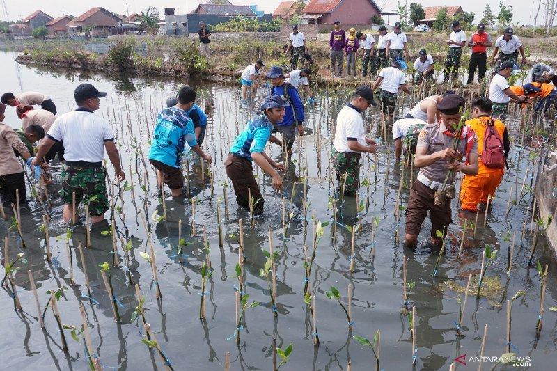 TNI Tanam300.074 mangrove dari Sabang sampai Merauke