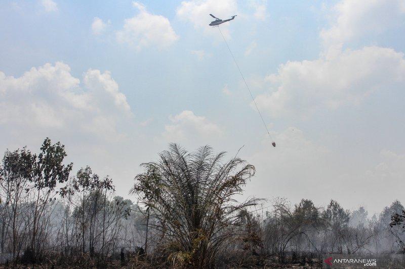 Kakek 75 tahun jadi tersangka pembakar lahan