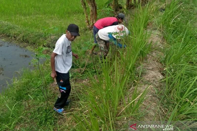 "Petani Kota Magelang ""geropyokan"" tikus"