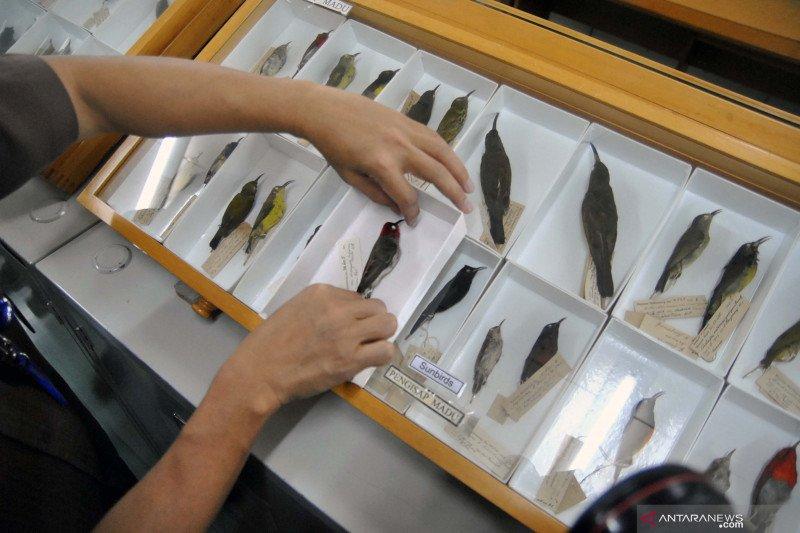 Peneliti LIPI: spesies baru terancam punah karena tekanan lingkungan