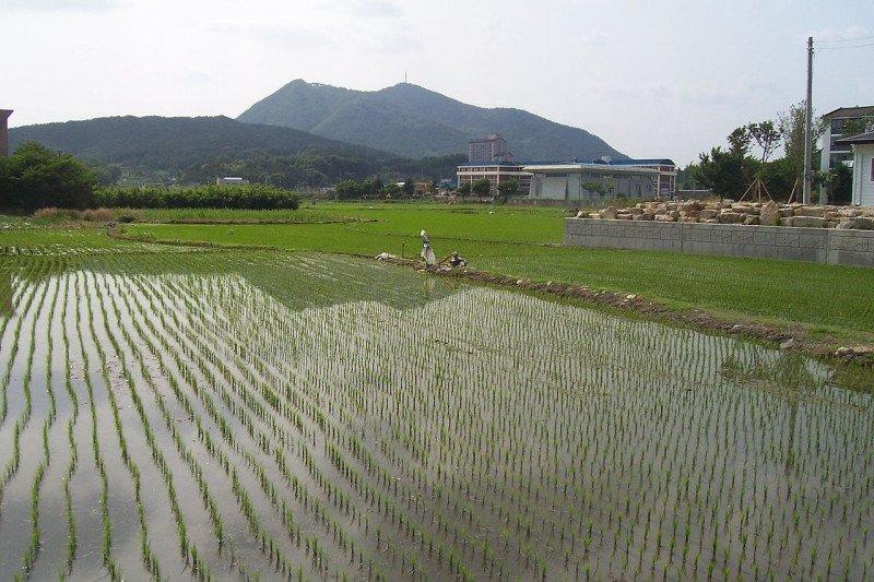 Pemerintah perlu berikan skema permodalan untuk gairahkan petani
