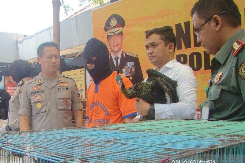 Polisi Gresik amankan 13 burung langka