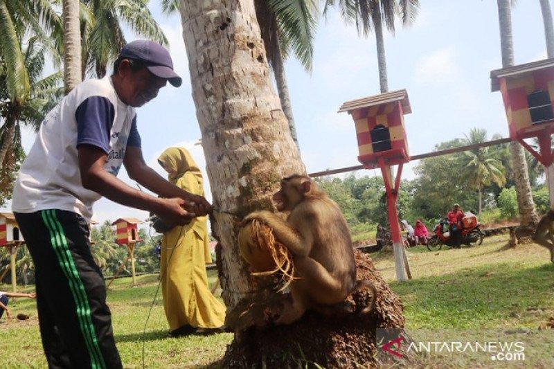 Ape school in Pariaman is nominated as an archipelago tourist village