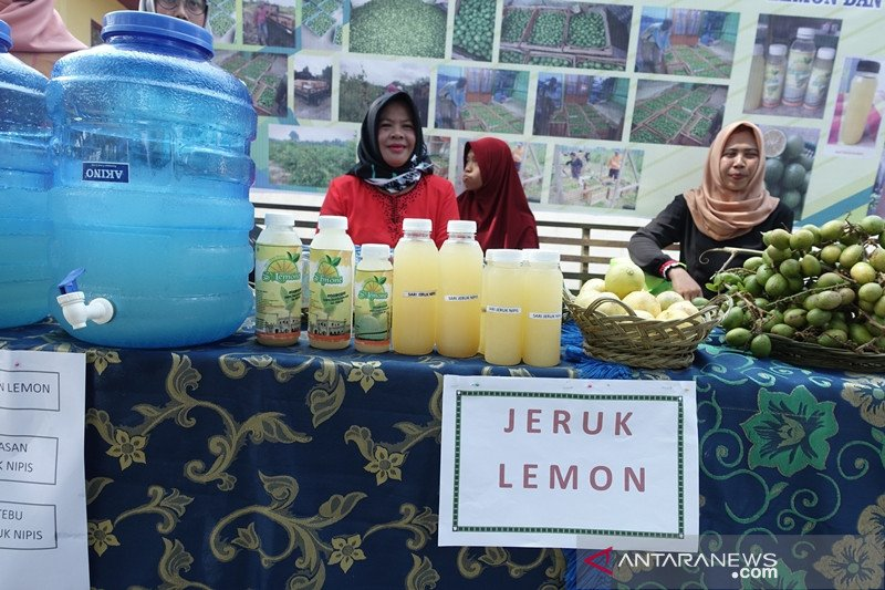 Cerita jeruk lemon dan teh bunga telang di gambut Siak