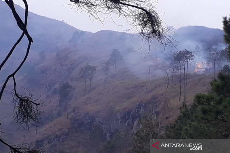 Hutan Gunung Andong di Magelang terbakar