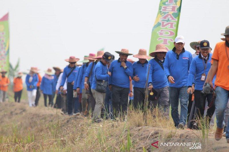 Kontribusi lahan rawa terhadap produksi pangan nasional