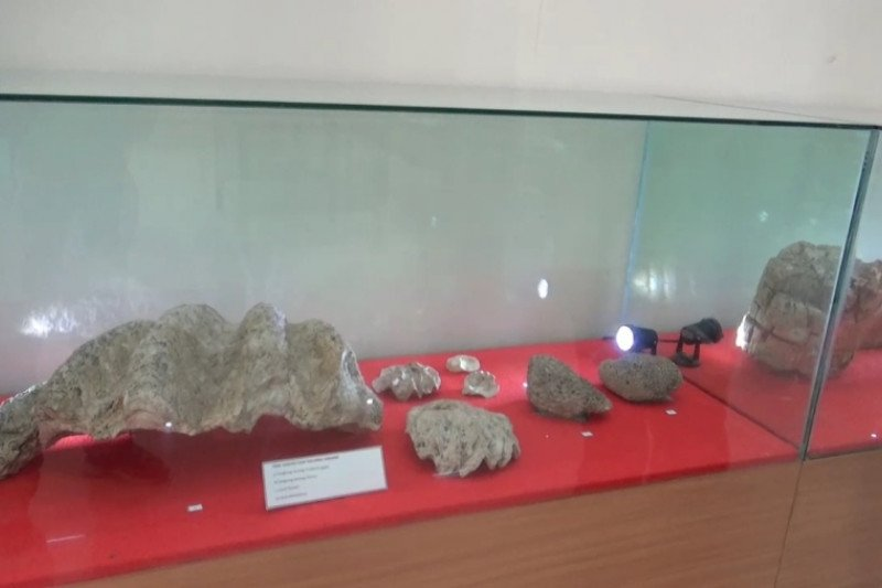 Peneliti temukan fosil kerang dan terumbu karang di Ngawi