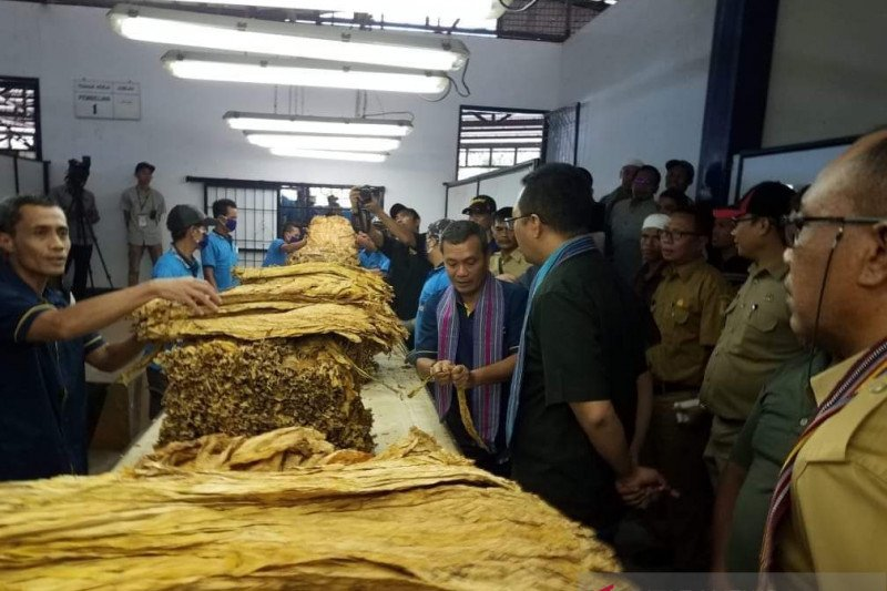 Gubernur NTB meminta perusahaan tambah kuota pembelian tembakau