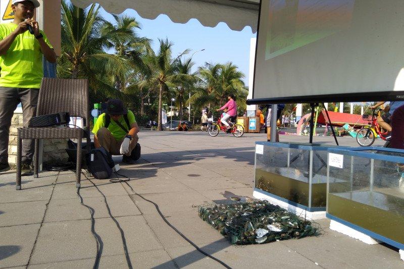 Kerang Hijau Teluk Jakarta tidak layak konsumsi