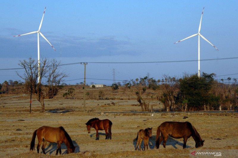 Survei: Pembangkit tenaga angin diprediksi bertambah usai COVID-19