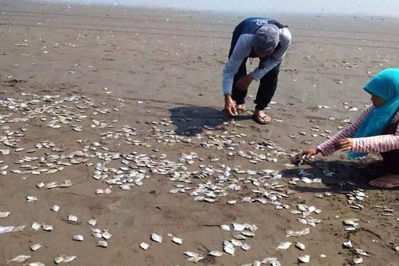 Ribuan ikan mati di Pantai Jetis diduga sengaja dibuang nelayan