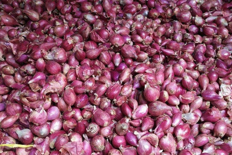 Harga bawang merah di Bandarlampung naik