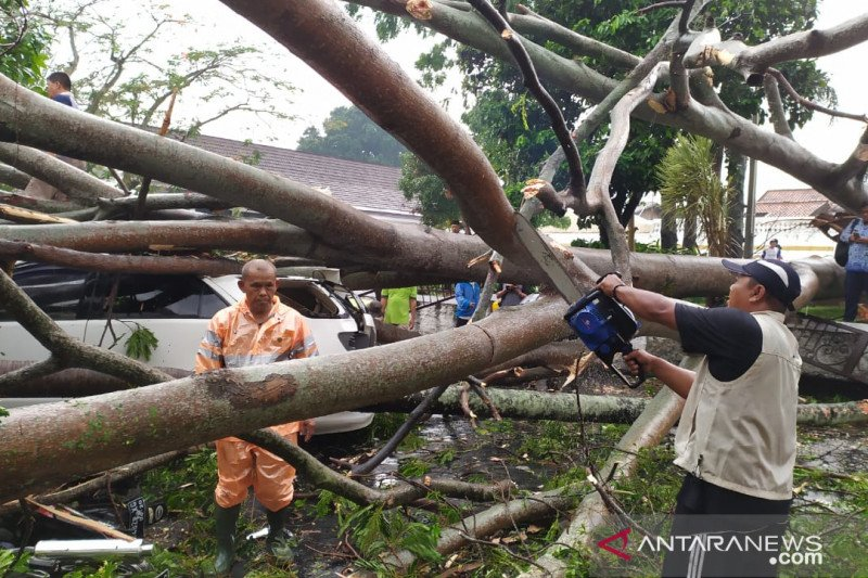 Hujan deras disertai angin tumbangkan pepohonan di Cianjur