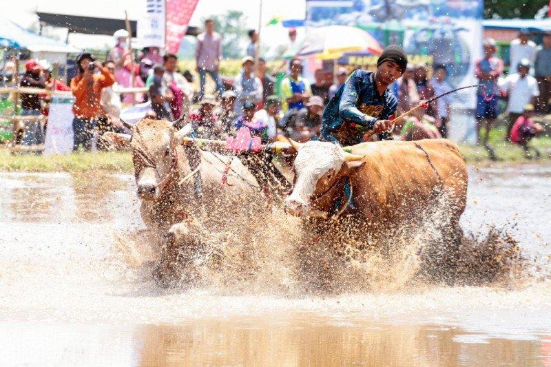 Lomba Karapan Sapi Brujul diharapkan dukung pariwisata Kota Probolinggo