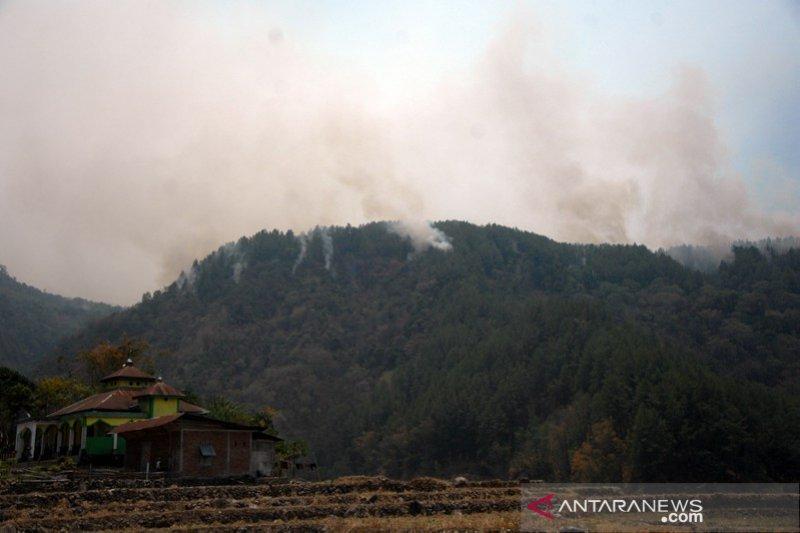 Kebakaran hutan pinus Gowa