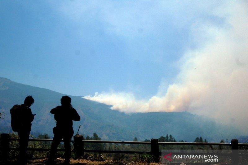 Kebakaran hutan pinus