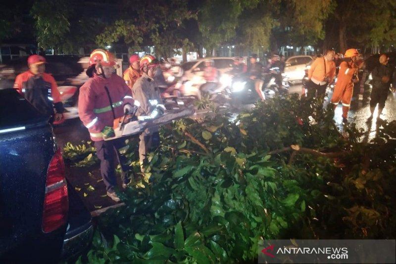 Hujan lebat di Bandung akibatkan pohon tumbang timpa mobil