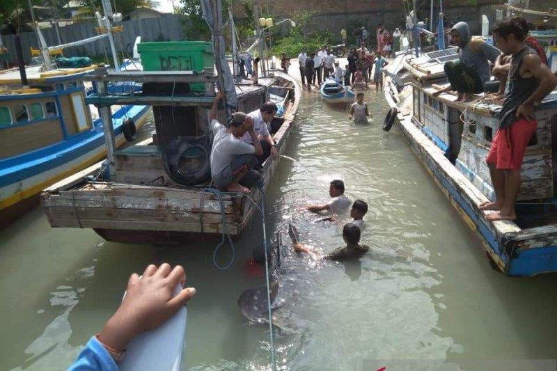 Nelayan Bangka Selatan temukan hiu terdampar