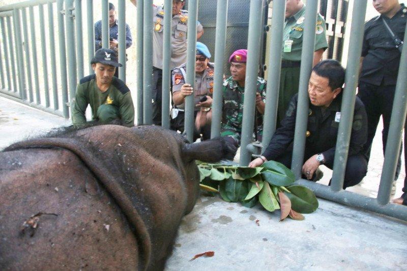 Kandang baru bagi badak di Suaka Rhino Sumatera
