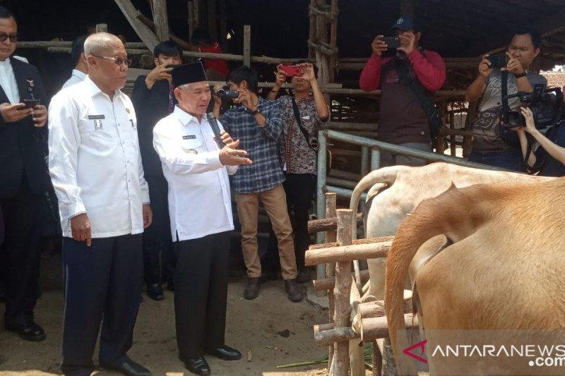 Ogan Komering Ulu Timur  pecahkan Rekor Muri, inseminasi sapi terbanyak