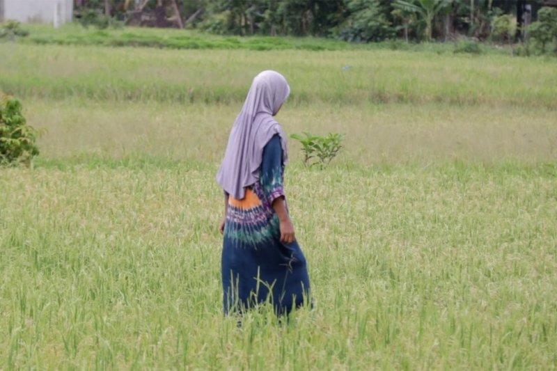 Solusi perbankan atasi inflasi beras di Aceh