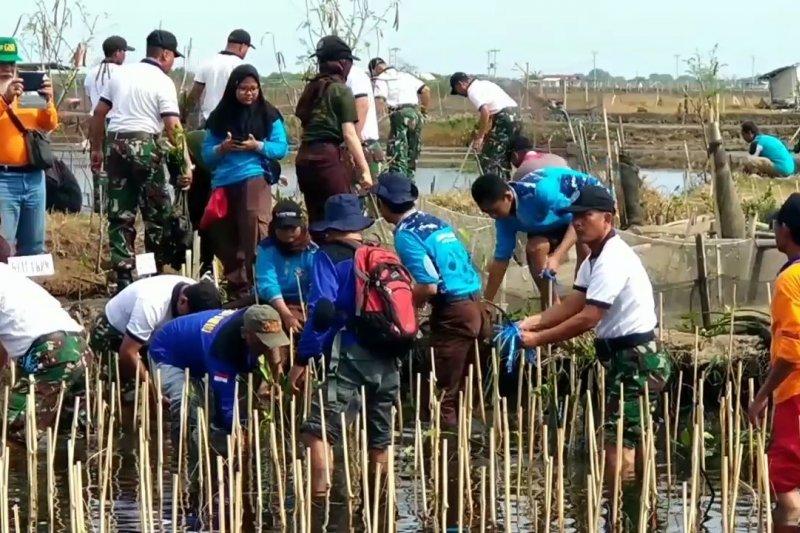 TNI AL tanam ribuan mangrove atasi abrasi