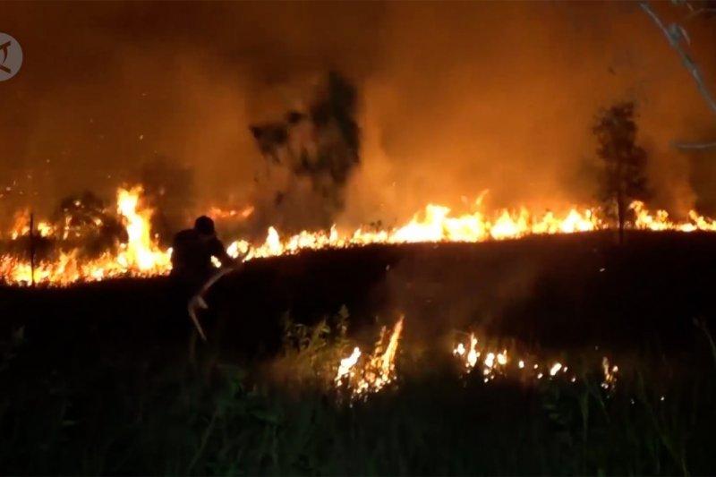 Lahan gambut di kawasan Wisata Pasir Padi terbakar