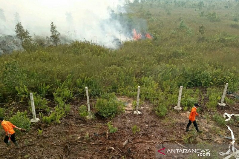 BPBD Sumsel : 255.904 hektare lahan terbakar akibat karhutla
