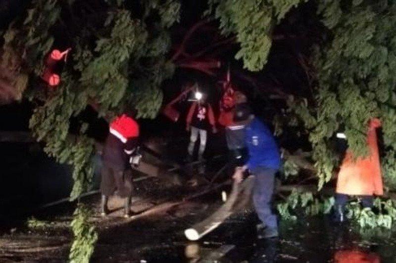 Angin kencang akibatkan 26 pohon tumbang melintang di Jalan Pantura Demak