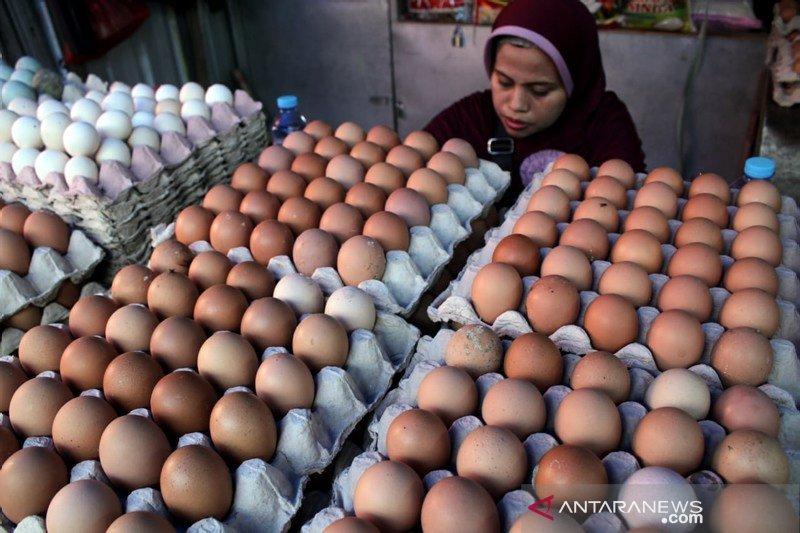 Harga telur naik jelang maulid