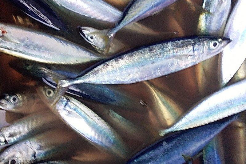Pemkab Sangihe menambah fasilitas di perikanan 'Dagho'