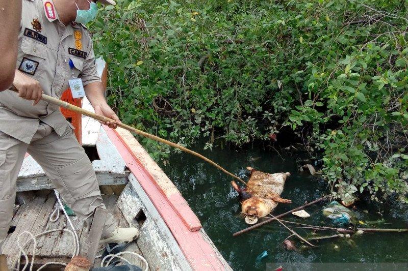 Terkait bangkai babi, Dinkes Medan imbau warga tidak gunakan air Sungai Bederah Medan