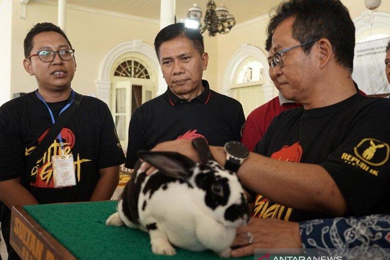 Pemkot Magelang siap mengembangkan peternakan kelinci
