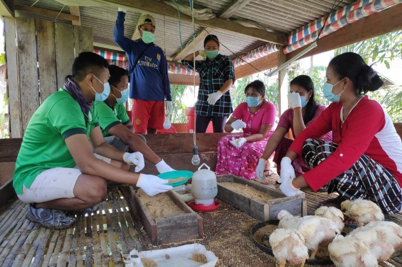 Peternak ayam Desa Jahitan merasa terbantu oleh PT GBSM