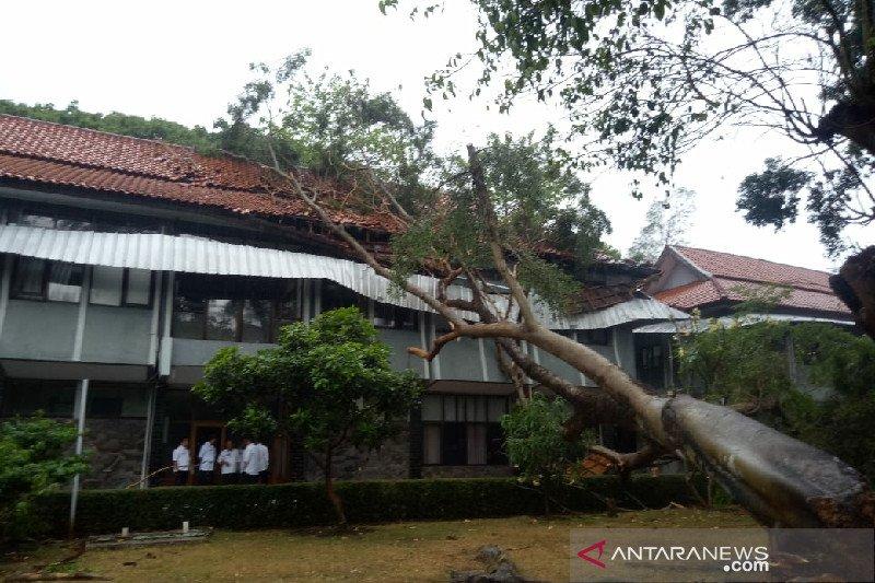 Kantor Wabup Garut tertimpa pohon tua tumbang